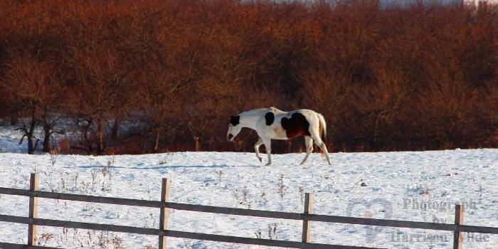 1_Horse.jpg